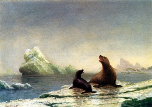 Seals by Albert Bierstadt