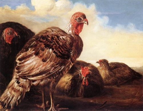 Domestic Fowl by Aelbert Cuyp