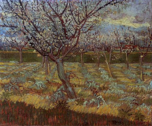 Apricot Trees in Bloom by Vincent van Gogh