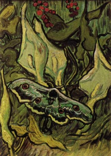 Death's-Head Moth by Vincent van Gogh