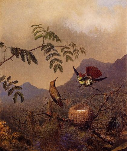 Frilled Coquette by Martin Johnson Heade