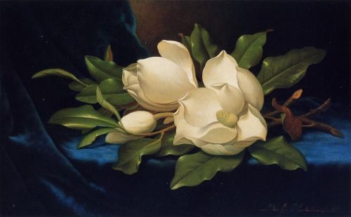 Giant Magnolias on a Blue Velvet Cloth by Martin Johnson Heade