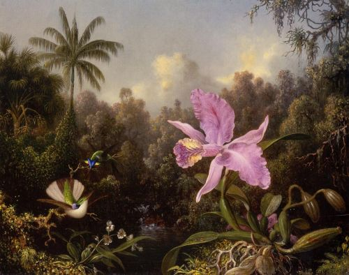 Orchid and Two Hummingbirds by Martin Johnson Heade