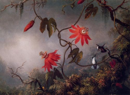 Passion Flowers and Hummingbirds by Martin Johnson Heade
