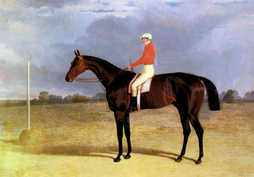A Dark Bay Racehorse with Patrick Connolly Up by John Frederick Sr Herring