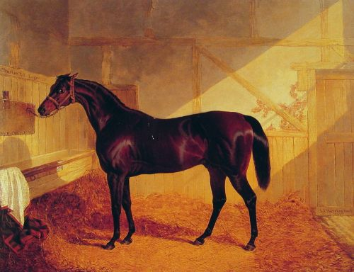 Mr Johnstone's Charles XII in a Stable by John Frederick Sr Herring