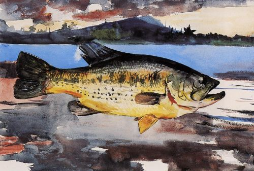 Bass by Winslow Homer