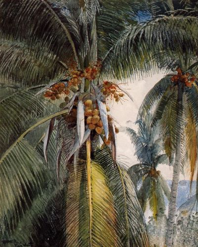 Coconut Palms, Key West by Winslow Homer