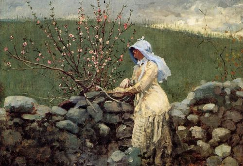 Peach Blossoms by Winslow Homer
