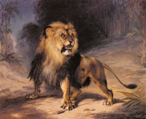 A Lion by William John Huggins