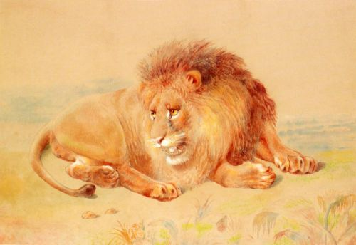 Lion by William Huggins
