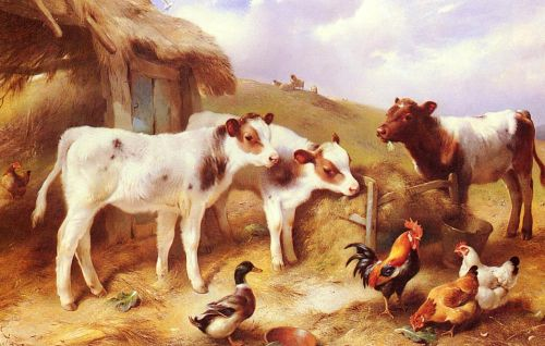 Calves, Chicken and a Duck by Walter Hunt