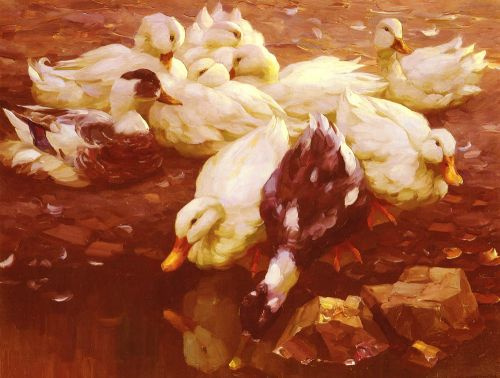 Ducks in the Pond by Alexander Koester