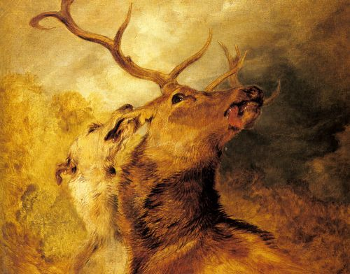 Stag and Hound by Edwin Henry Landseer