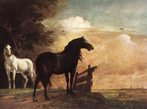 Horses in a Field by Paulus Potter